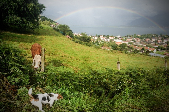 """In lizza per la categoria: """"foto tecnicamente ed esteticamente migliore""""   -  Francesco Orifici: The cow, the dog and the rainbow - Vercana CO"""