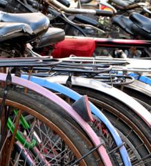 bicicologno