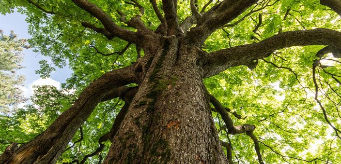 Cernusco: il Consiglio vuole le piante mangia smog, ma non ...