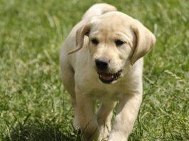 area cani gessate