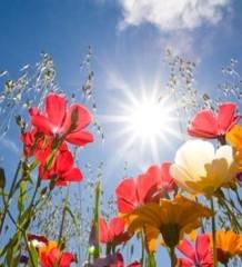 api-e-fiori1